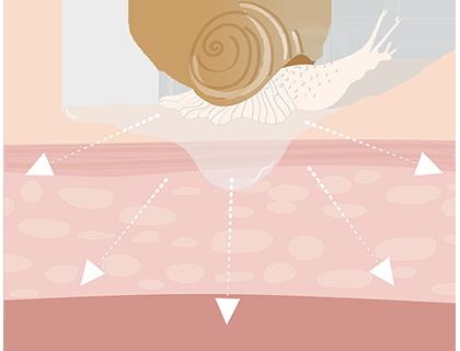 La bava di lumaca prezioso ingrediente nella produzione cosmetica
