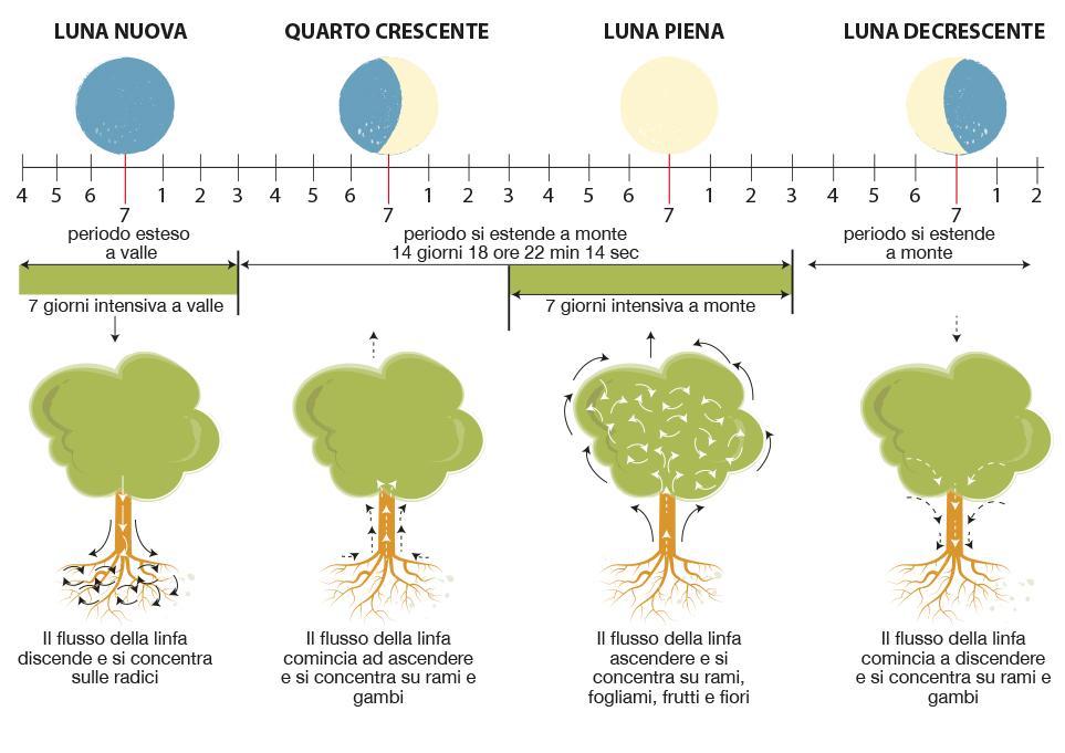 fasi_lunari-kosmetikal-biodinamica